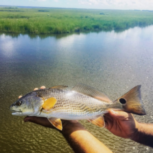 Sport Fishing – Redfish